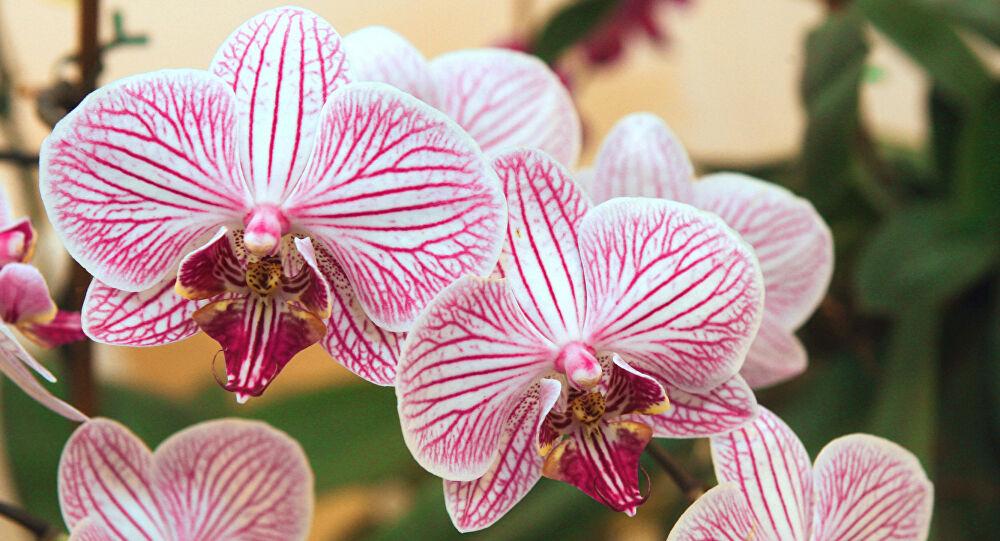نبات قد يساعد في علاج السرطان
